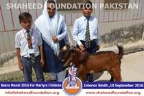 SFP Bakra Mandi Interior Sindh 2016