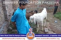 SFP Bakra Mandi Rawalpindi / Islamabad 2016