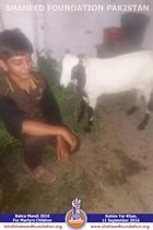 SFP Bakra Mandi Punjab 2016