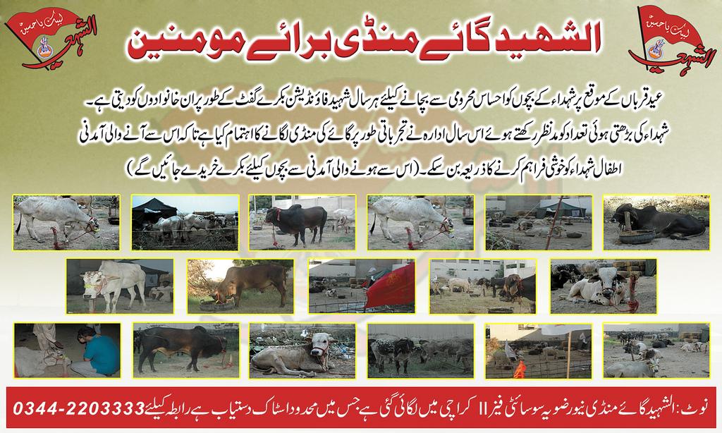 Eid-ul-Azhaa Projects 2012